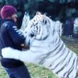 "Lewis Hamilton ""abbraccia"" tigre bianca in Messico3"