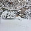 Maltempo: neve a Pescara, Molise, Marche e Puglia10
