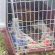 Napoli, cagnolina partorisce 12 cuccioli in strada