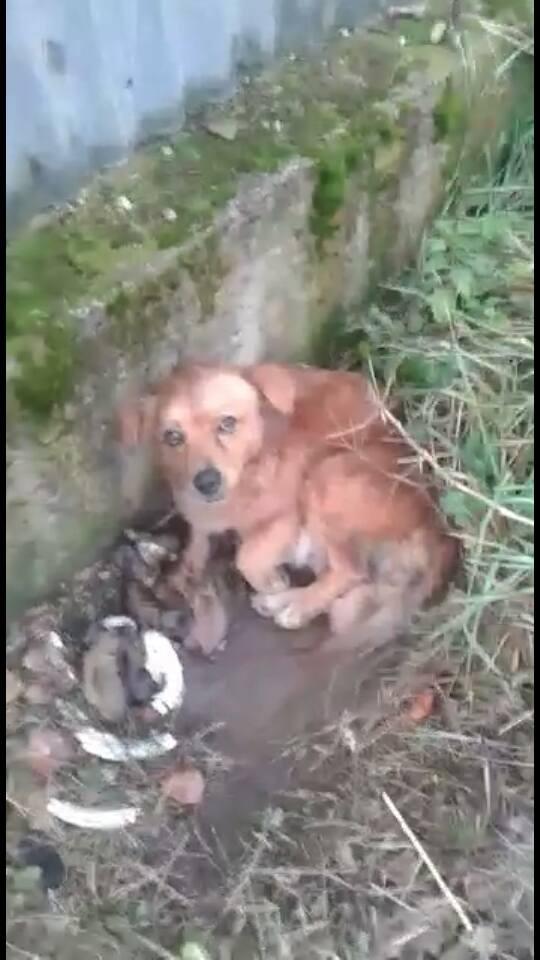 Napoli, cagnolina partorisce 12 cuccioli in strada4