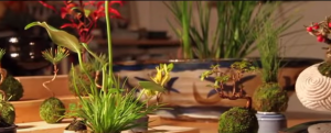 YOUTUBE Bonsai che fluttua come un pianeta: è l'Air Bonsai
