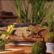 YOUTUBE Bonsai che fluttua come un pianeta: è l'Air Bonsai 2