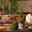 YOUTUBE Bonsai che fluttua come un pianeta: è l'Air Bonsai 3