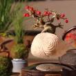 YOUTUBE Bonsai che fluttua come un pianeta: è l'Air Bonsai 4