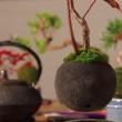 YOUTUBE Bonsai che fluttua come un pianeta: è l'Air Bonsai 6