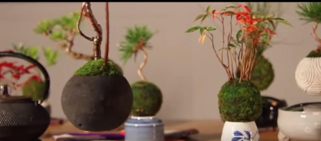 YOUTUBE Bonsai che fluttua come un pianeta: è l'Air Bonsai 7