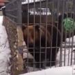 YOUTUBE Ubriaco mette la mano nella gabbia e l'orso...