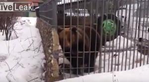 YOUTUBE Ubriaco mette la mano nella gabbia e orso…