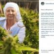 Usa, suore new age coltivano marijuana in garage