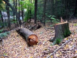 Simeone Siega va tagliare legna nel bosco: ucciso da tronco