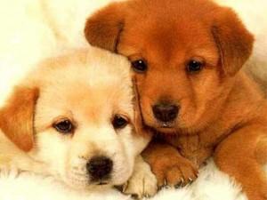 I cani in Liguria si allevano in un mese, tranne 2 giorni...