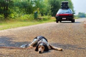 """""""Amo leccare..."""": lo spot hard per salvare cani abbandonati"""