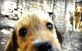 Impiccano cane: taglia 20 mila euro a chi dà notizie