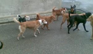 Guarda la versione ingrandita di Cristina Di Caterina muore per malore: cani sbranano corpo