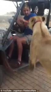 YOUTUBE Leone salta su golf car e si mette in braccio a uomo