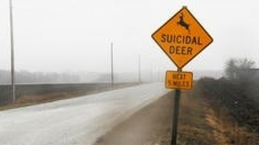 """""""Cervi suicidi, attenzione"""": assurdo cartello negli Usa FOTO"""