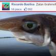 commenti-memorabili-facebook (40)