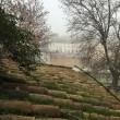 Nebbia Roma: Capitale si sveglia22