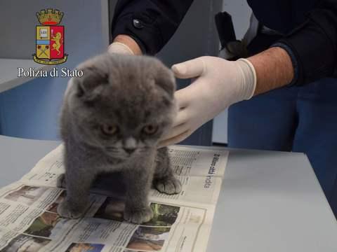 Cuccioli cane e gatti salvati: 2 indagati a Milano