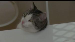 Hotel per gatti con suite e bagni personali