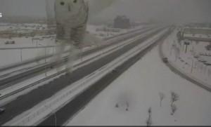 Gufo nevi irrompe nella telecamera controllo traffico