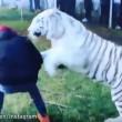 "Lewis Hamilton ""abbraccia"" tigre bianca in Messico4"