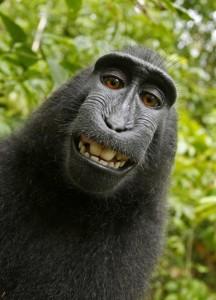 YouTube macaco scattò selfie, giudice: niente copyright