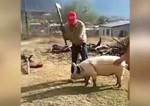YOUTUBE Prova a uccidere maiale con accetta ma per lui...