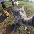 Manny, il gatto capace di farsi i selfie FOTO