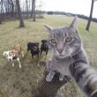 Manny, il gatto capace di farsi i selfie FOTO2