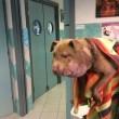 Palla, cagnolina deturpata da un laccio al collo FOTO 2