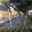 Primavera a Roma: fioriscono gelsomino giallo,rosa, geranio