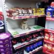 Olly, il gatto che da sei anni vive in un supermercato