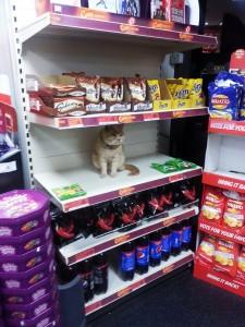 Guarda la versione ingrandita di Olly, il gatto che da sei anni vive in un supermercato FOTO
