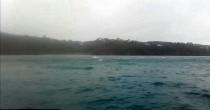 YOUTUBE Centinaia di delfini nella Manica saltano insieme