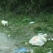 Cuccioli cane nel sacco di plastica lanciati da furgone2