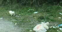 Cuccioli cane nel sacco di plastica lanciati da furgone FOTO