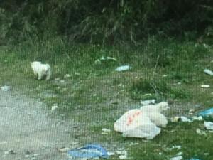 Guarda la versione ingrandita di Cuccioli cane nel sacco di plastica lanciati da furgone FOTO