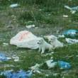Cuccioli cane nel sacco di plastica lanciati da furgone7