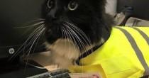 "VIDEO Felix gatta anti-topi ""assunta"" dalla stazione FOTO"