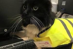 """Guarda la versione ingrandita di VIDEO Felix gatta anti-topi """"assunta"""" dalla stazione FOTO"""
