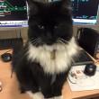 "Felix gatta anti-topi ""assunta"" dalla stazione2"