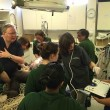 Ginecologo fa partorire gorilla col cesareo8