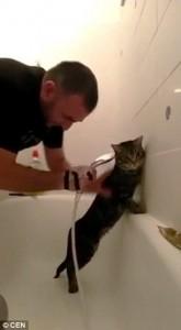 Guarda la versione ingrandita di YOUTUBE Il gatto che ama fare il bagno ed essere insaponato
