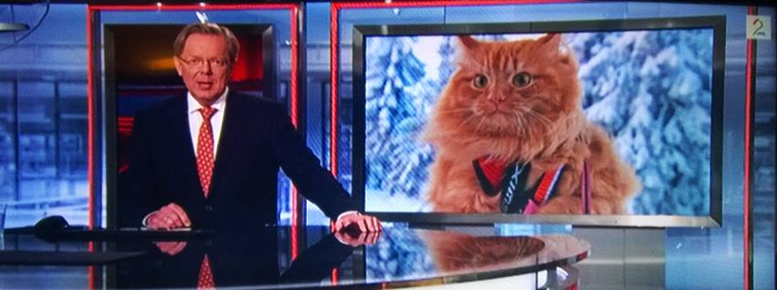 Jesper, gatto sciatore che si comporta da cane