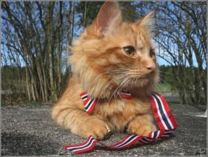 Guarda la versione ingrandita di YOUTUBE Jesper, il gatto sciatore che si comporta da cane