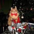 Jesper, gatto sciatore che si comporta da cane 3