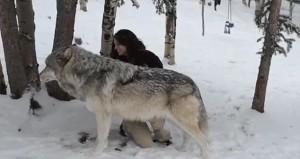 Guarda la versione ingrandita di YOUTUBE Kekoa, il lupo che bacia la sua amica Danielle