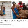 Kenya, cucciolo di giraffa salvato dopo 4 ore nel fiume