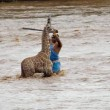 Kenya, cucciolo di giraffa salvato dopo 4 ore nel fiume3